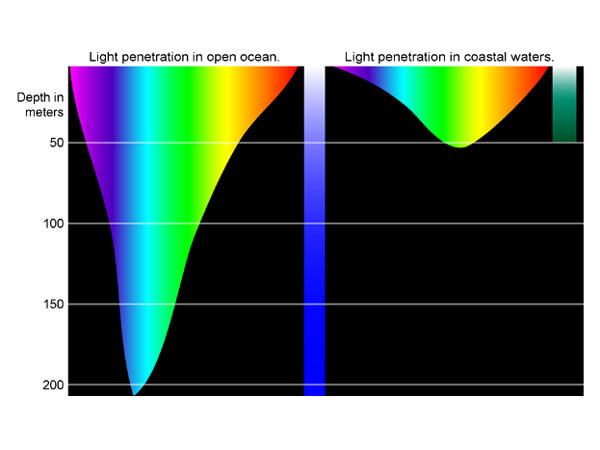 Are Color of light that penetrates seawater agree